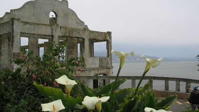 Цветы лилии на фоне Алькатрас