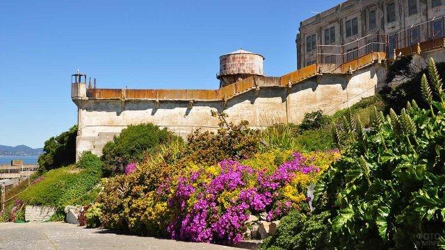 Цветы, выращенные заключёными