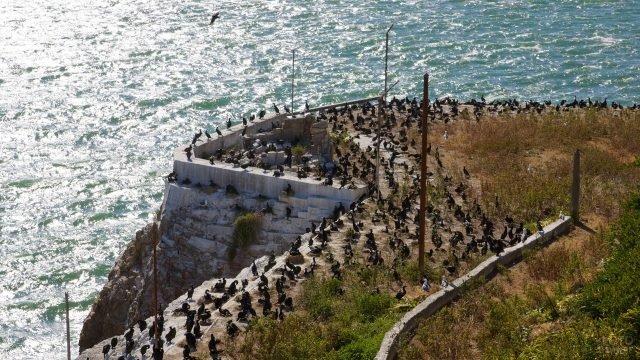 Птицы на острове Алькатрас