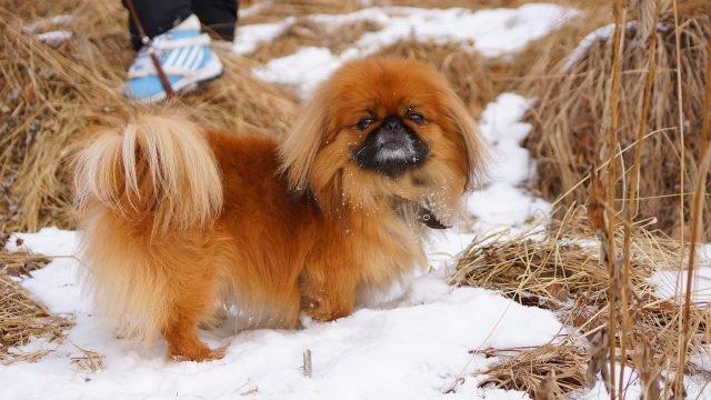 Пёсик на зимней прогулке