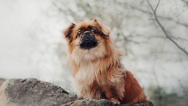 Пёсик сидит на камне и смотрит куда-то вдаль