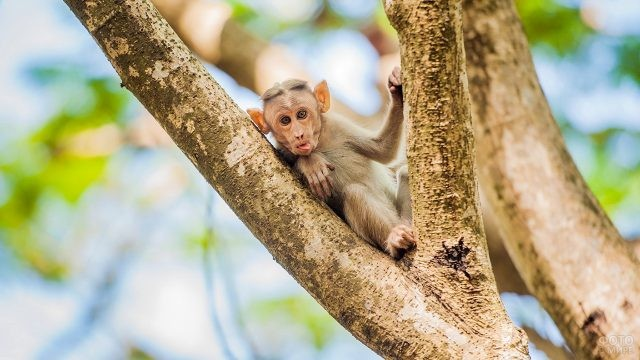 Маленькая обезьянка с высунутым языком