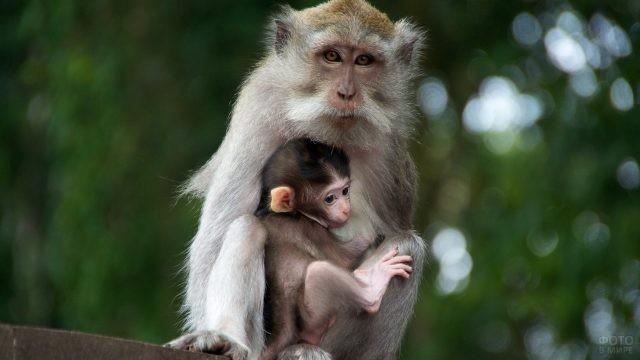 Мама-обезьянка со своим детёнышем
