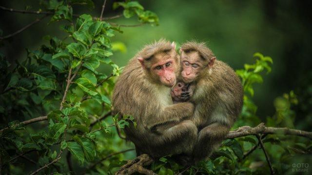 Семейство обезьян сидит в обнимку