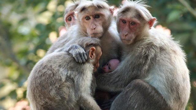 Семья обезьян с малышами