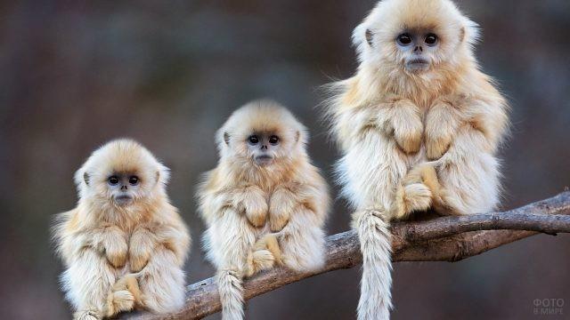 Три обезьянки сидят на дереве