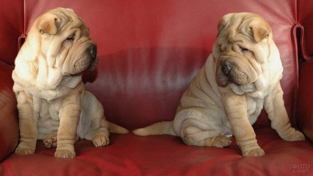 Два щенка сидят на красном диване