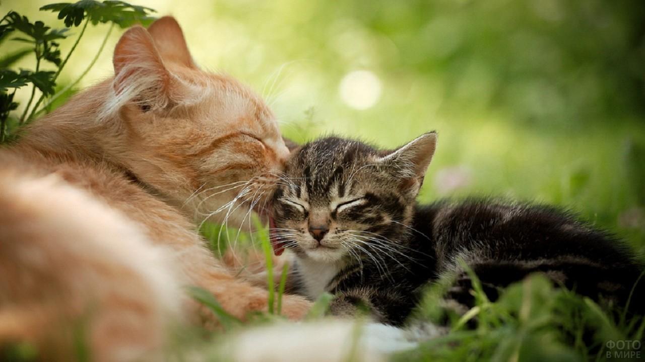 Кошки с котятами (31 фото)