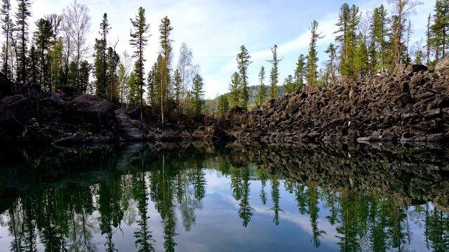Ели отражаются в водах Каменного залива на Телецком озере