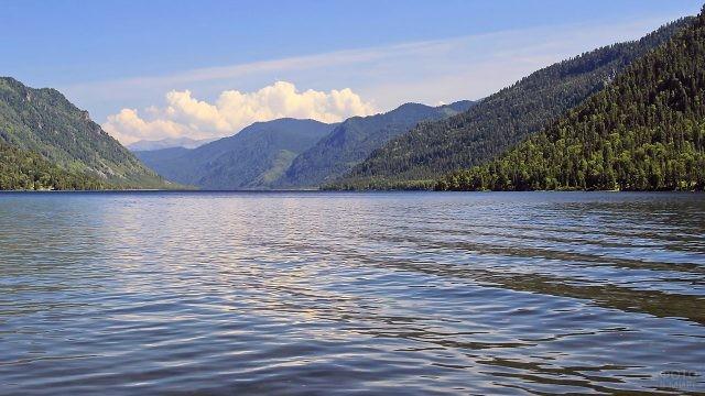 Изумрудный лес на берегах Телецкого озера