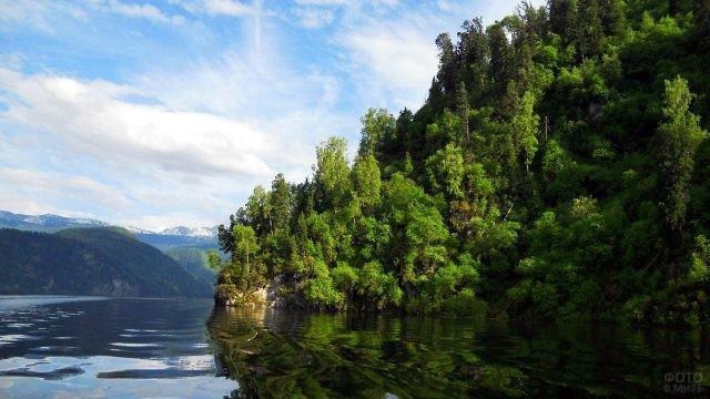 Лес на скалистом берегу упирается в воду Телецкого озера