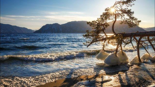 Обледеневшие ветки упавшей сосны на берегу Телецкого озера