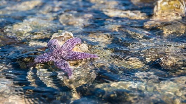 Морская звезда в лагуне Буссе