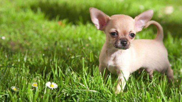 Милый щенок гуляет по зелёной травке