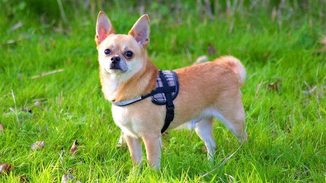 Пёс гуляет по зелёной лужайке