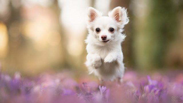 Собака скачет по цветочному полю