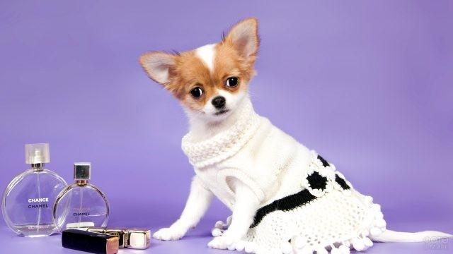 Собака в стильном платье рядом с продукцией шанель