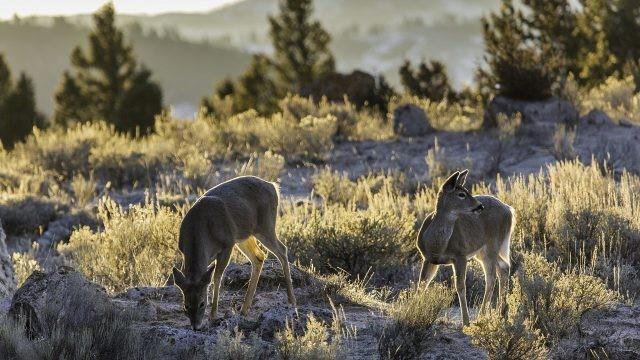 Животные в долине в поисках еды