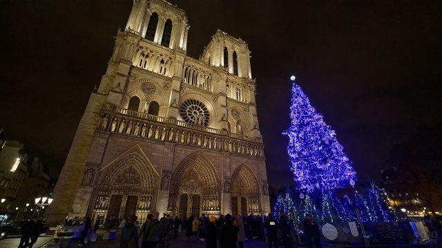 Голубые огни рождественской ели у стен Нотр Дам де Пари