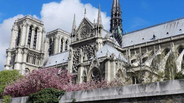 Кроны весенних деревьев у стен Нотр Дам в Париже
