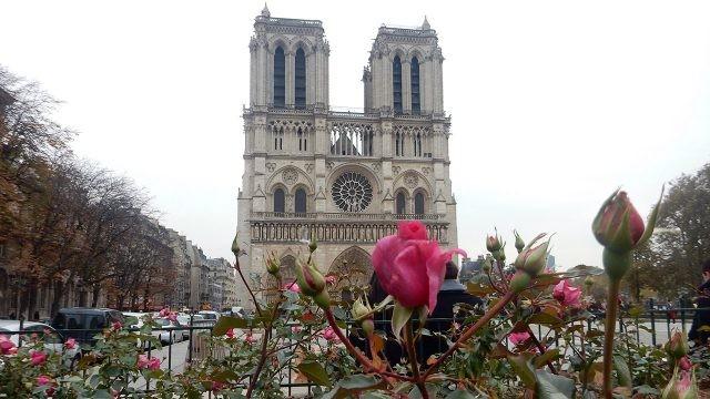 Роза на фоне фасада Нотр Дам де Пари