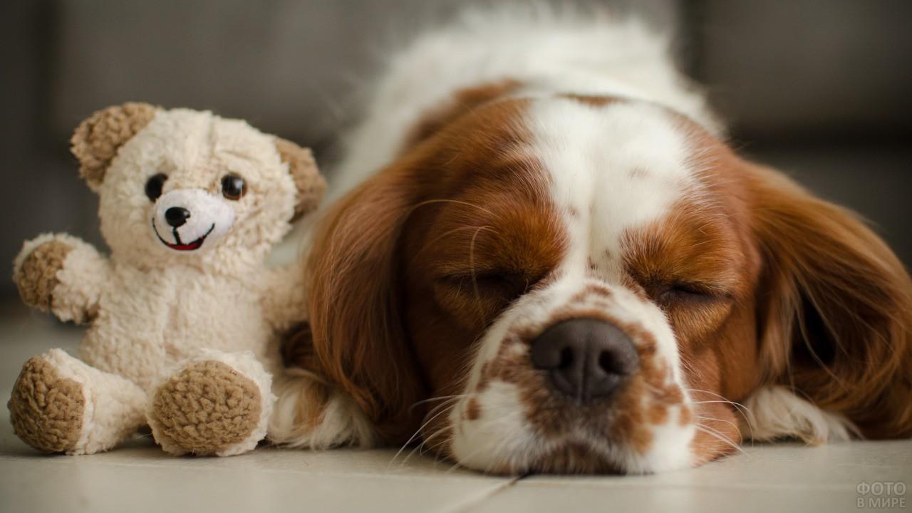 Спящий пёс рядом со своей игрушкой