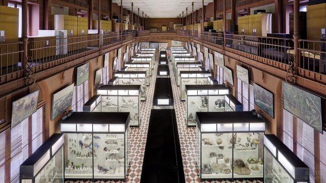 Экспозиция Зоологического музея МГУ