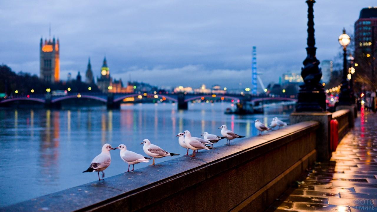 Чайки на набережной Темзы