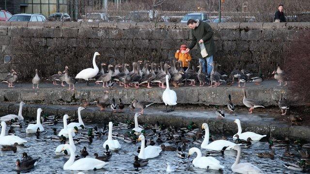 Папа с сыном кормят птиц у набережной