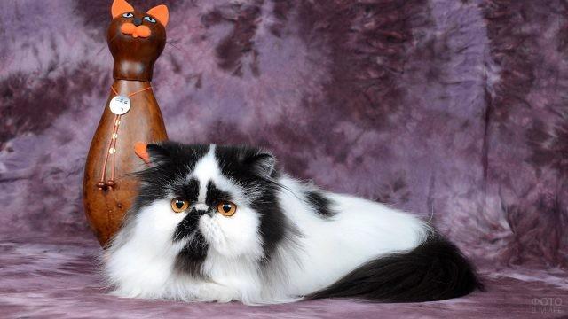Чёрно-белый персидский кот