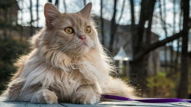 Персидский котик сидит на природе