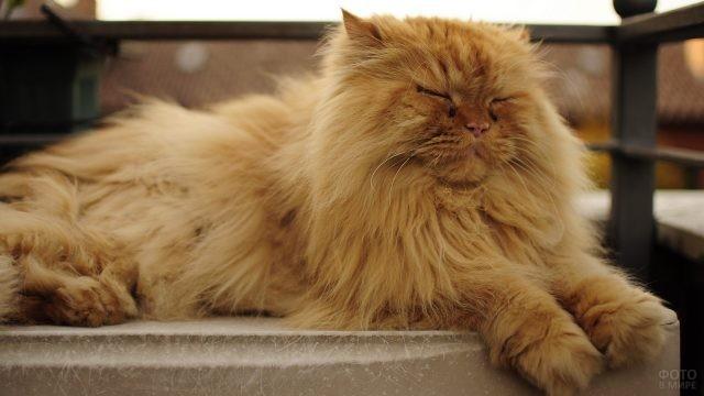 Рыжий котик дремлет на балконе