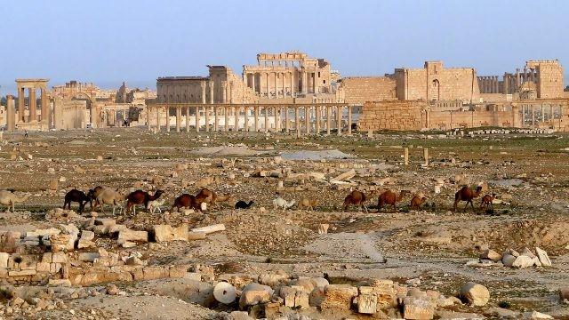 Верблюды на фоне руин Пальмиры в Сирии