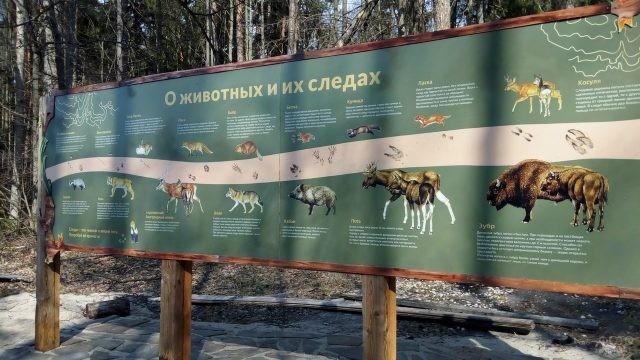 Информационный щит о животных в заповеднике Беловежской пущи