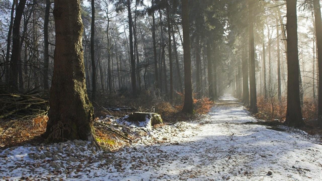 Поздняя осень в Беловежской пуще