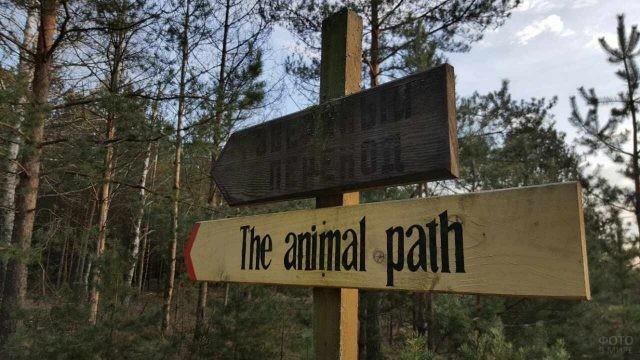 Развилка в лесу в Беловежской пуще