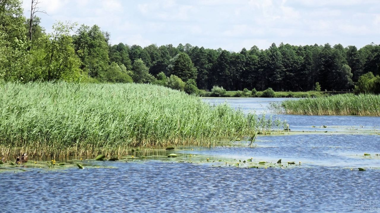 Великолепное озеро в Беловежской пуще