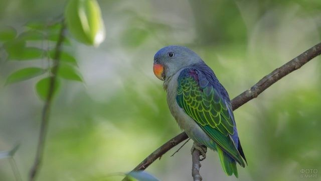 Голубой попугай сидит на ветке