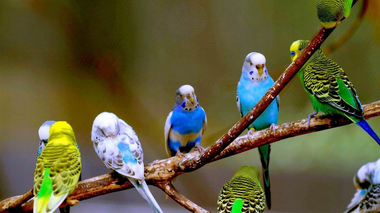 Пять попугаев сидят на одной ветке