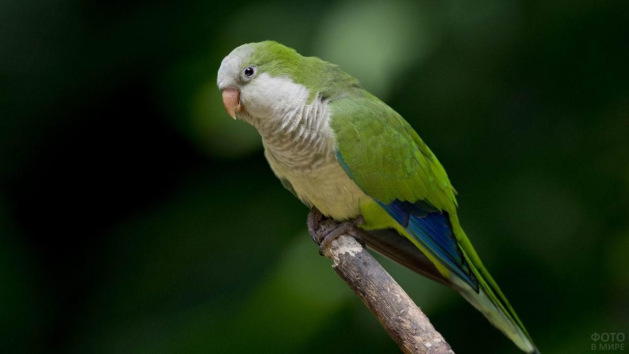 Попугай сидит на краю ветки
