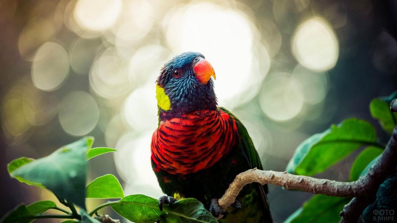 Разноцветный попугай сидит на ветке