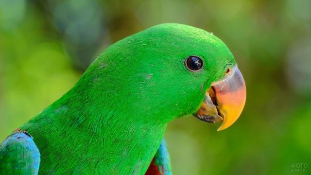 Зелёный попугай с жёлтым клювом