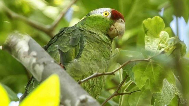 Зелёный попугай сидит на ветке