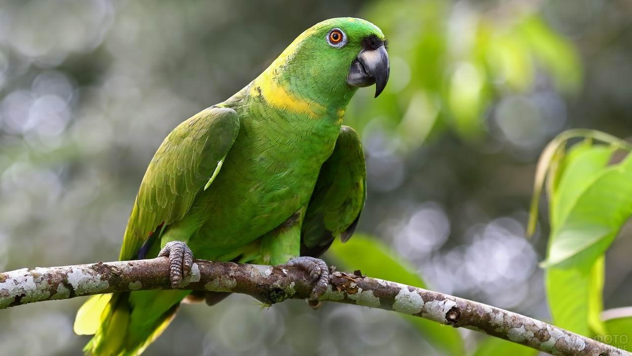 Зелёный попугай сидит на веточке