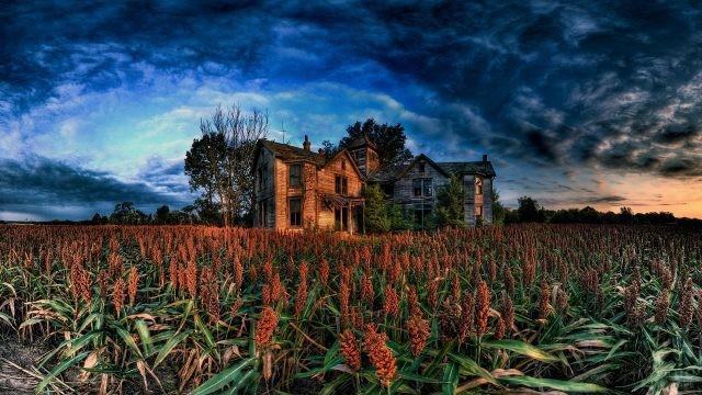 Кукуруза перед большим заброшенным особняком