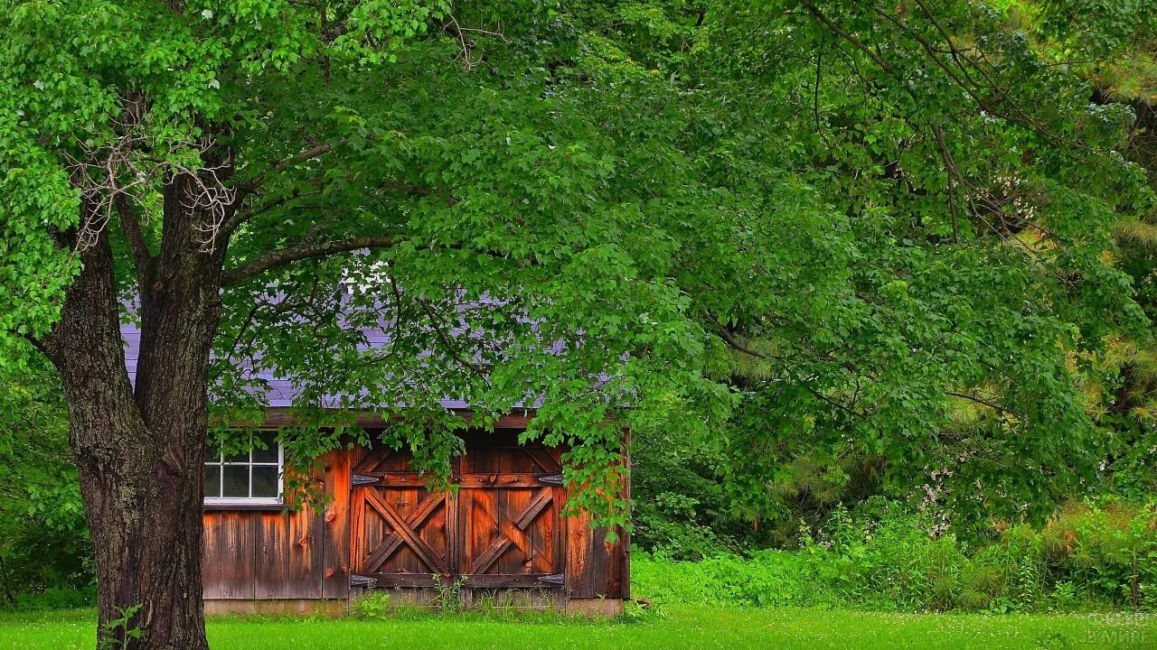 Старый дом среди зелёной листвы