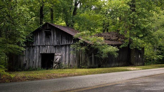 Старый покосившийся сарай, заросший лесом