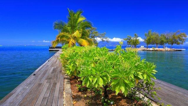 Пальмы на пристани у синего моря