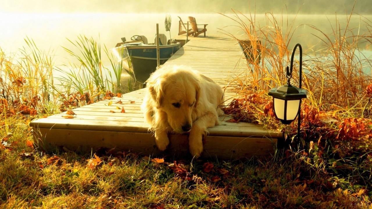 Собака на осенней пристани
