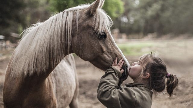 Девочка целует лошадь